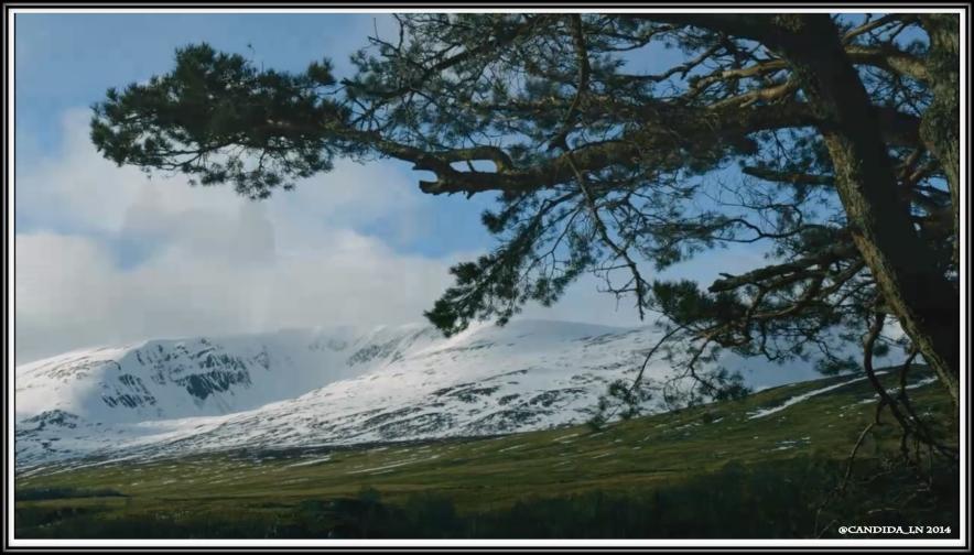 Scotland_7
